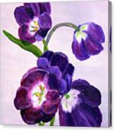 Purple Tulips On Gray Background Canvas Print