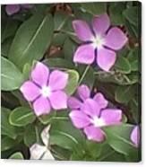 Purple Vintas Flower Photograph Canvas Print