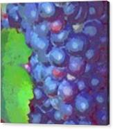 Purple Wine Grapes 2017 Canvas Print