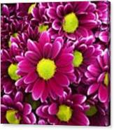 Purple Yellow Flowers Canvas Print
