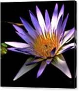 Purple Zen Canvas Print