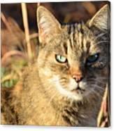 Purr-fect Kitty Cat Friend Canvas Print