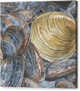 Quahog On Clams Canvas Print