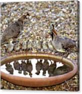 Quail Family Gathering Az Canvas Print