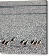 Quail Lines Canvas Print