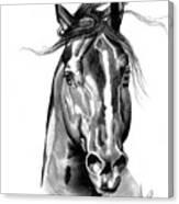 Quarter Horse Head Shot In Bic Pen Canvas Print