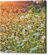 Queen Anne At Sunset Canvas Print