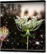 Queen Annes Lace And Sparkles At Dusk Canvas Print