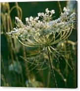 Queen Anne's Lace In Green Horizontal Canvas Print