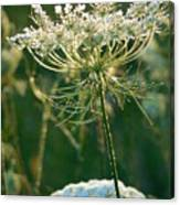 Queen Anne's Lace In Green Vertical Canvas Print