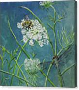 Queen Anne's Lace  Canvas Print