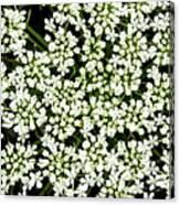 Queen Anne's Lace Patterns Canvas Print