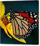 Queen Monarch 2 Canvas Print