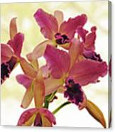 Queen Of Orchids Canvas Print