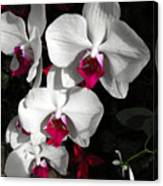 Queen Orchid Canvas Print