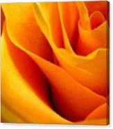Queen Rose Canvas Print