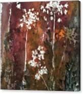 Queens Lace 3 Canvas Print