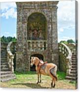 Quelven Village Square, Awaiting His Owner, Brittany, France Canvas Print