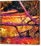 Quiet Meadow Canvas Print