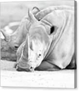 Rhino Quiet Moment Canvas Print