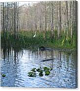 Quiet Moment In The Glades Canvas Print