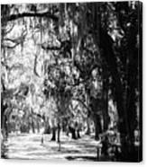 Quiet Walk Canvas Print
