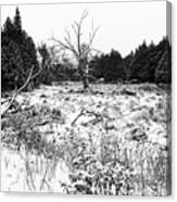 Quiet Winter Black And White Canvas Print