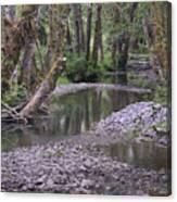 Quinault Rain Forest 3147 Canvas Print