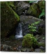 Quinault Washington Rain Forest Canvas Print
