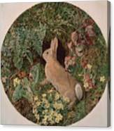 Rabbit Amid Ferns And Flowering Canvas Print