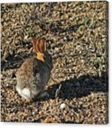 Rabbit. Canvas Print