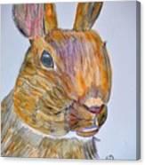 Rabbit Watercolor 15-01 Canvas Print
