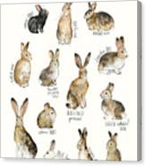Rabbits And Hares Canvas Print