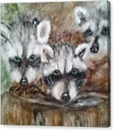 Raccoon Babies By Christine Lites Canvas Print