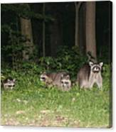 Raccoon Family Canvas Print