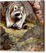 Raccoon Found Treasure  Canvas Print