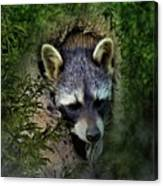 Raccoon In A Log Canvas Print