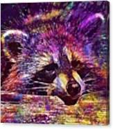 Raccoon Wild Animal Furry Mammal  Canvas Print