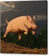 Racing Pig Canvas Print