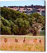 Nine Racing Whitetail Deer Canvas Print