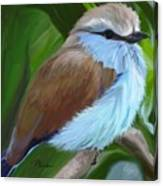 Racket-tailed Roller Canvas Print
