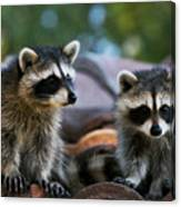 Racoons On The Roof Canvas Print