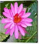 Radiant Pink Canvas Print