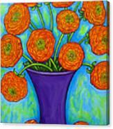 Radiant Ranunculus Canvas Print