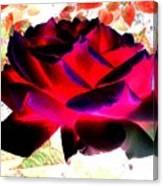 Radiant Red Rose Canvas Print