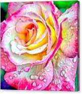 Radiant Rose Of Peace Canvas Print