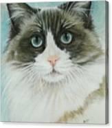Ragdoll Canvas Print