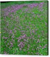 Ragged Robin IIi Canvas Print
