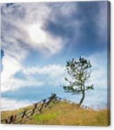 Rail Fence And A Tree Canvas Print