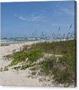 Railroad Vine And Sea Oats On The Atlantic In Florida Canvas Print